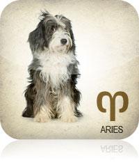 Aries Pet 2017 2016