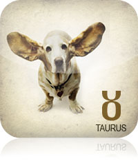 Taurus Pet Horoscope 2017 2016