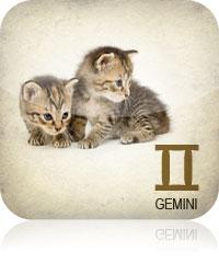 Gemini Pets 2017 2016