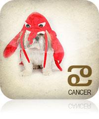 Cancer Pet 2017 2016
