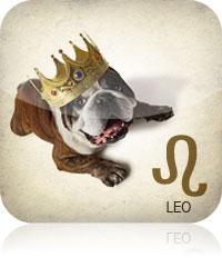 Leo Pet Zodiac 2017 2016