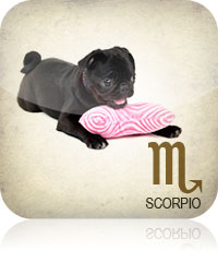Scorpio Pet Horoscope 2017 204