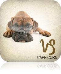 Capricorn Dog Horoscope 2017 2016
