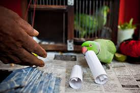 Parrot Fortune Telling